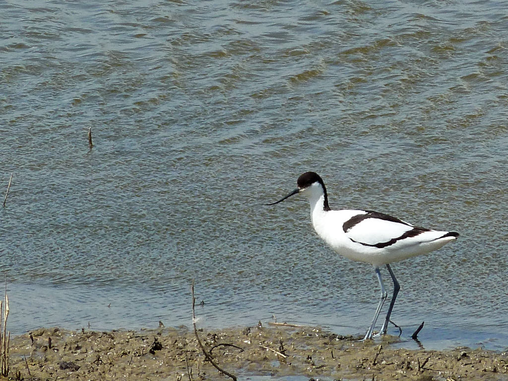 Minsmere coach trip 12 October: get your tickets