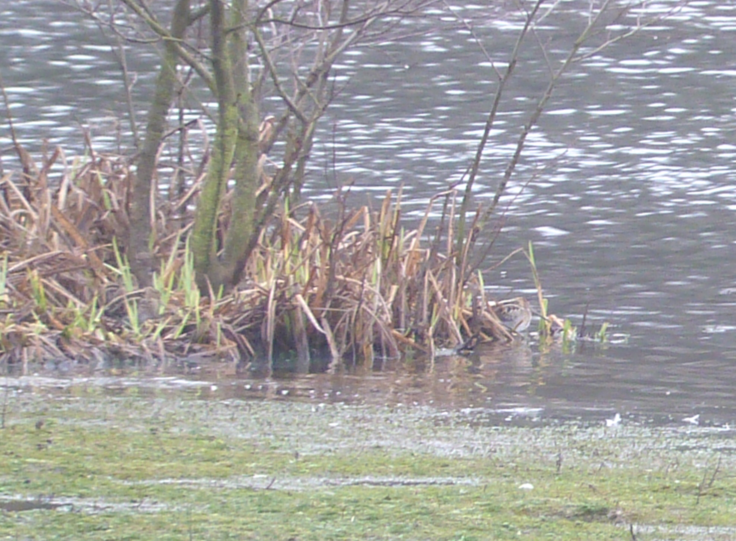 Cryptic Snipe - there are four in the photograph!