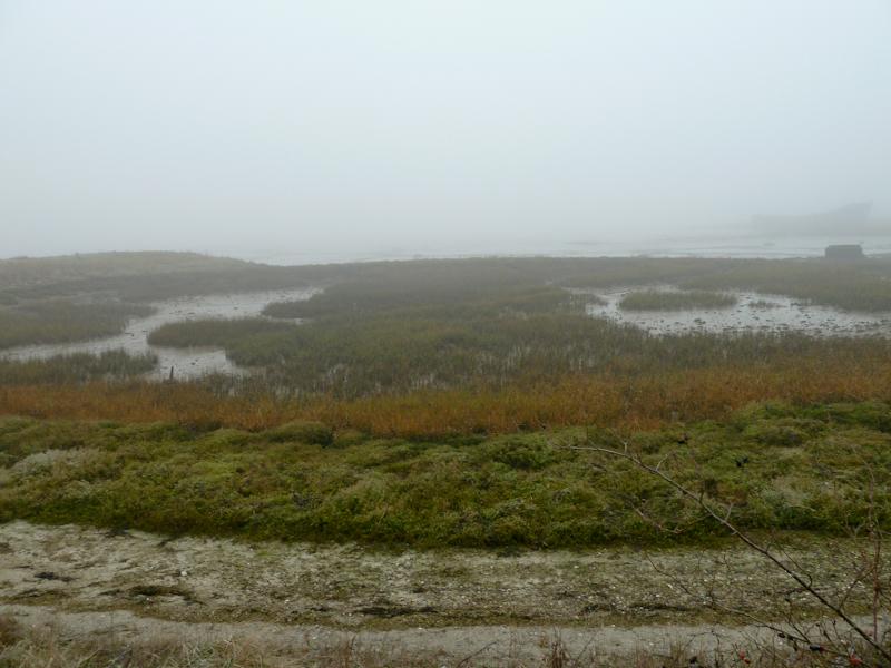 Fog on the Medway
