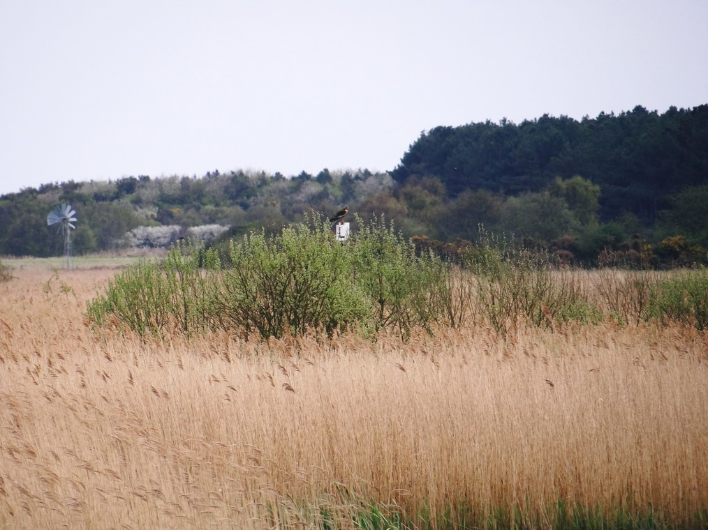 Photo taken on Minsmere coach trip by Leslie and Dan McMaster