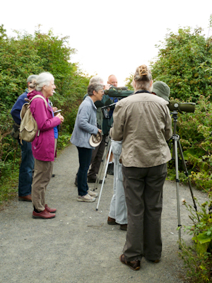 The group looking for Spotted Redshank