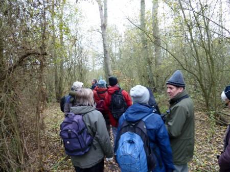 Walking through Alder Wood