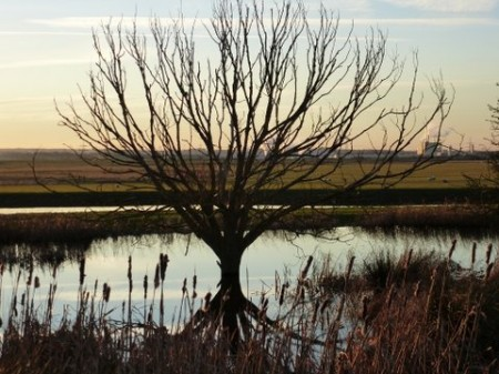 Tree reflected in pool at Elmley by Sally Jennings.