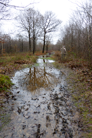 Waterlogged Blean