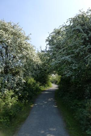 Rainham Blossom