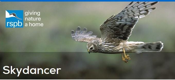RSPB skydancer webpage