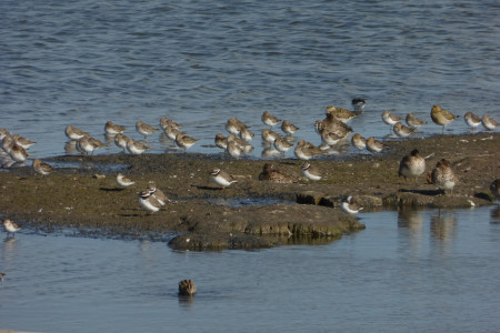 Waders at Oare