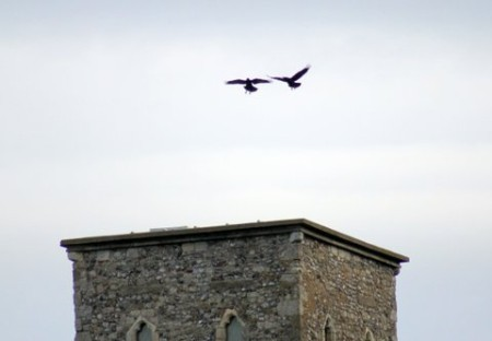 ravens over towers