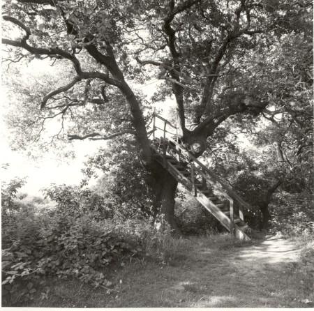 tree hide