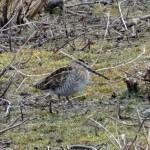 Sevenoaks KWT Reserve; Spring - what Spring?