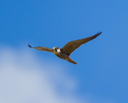 Hobby taken by Ian Griffin