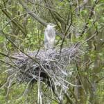 Sevenoaks KWT Reserve