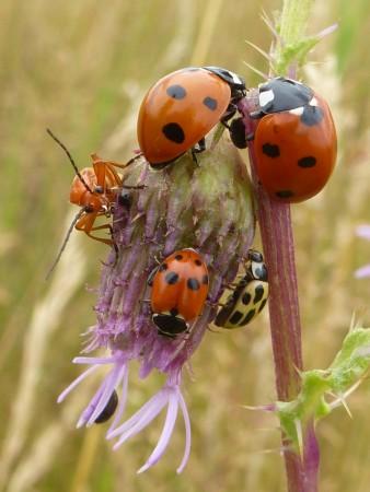 ladybirds evidence (1)