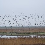 Group trip to Rainham RSPB Reserve