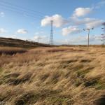 Swanscombe Marshes