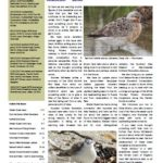 Wader Quest Newsletter