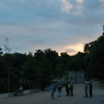 Birds and bats at Mote Park evening walk