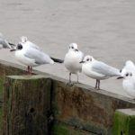 Birds from Gravesend Promenade