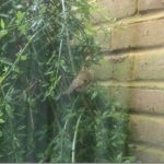 A Bird in my Garden
