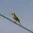 Local Birding