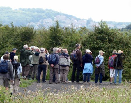 Gravesend RSPB Group at Cliffe