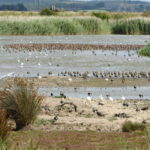 A Visit to Oare Marsh KWT Reserve