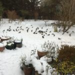 More Reports of Unusual Birds in Gardens