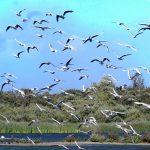 Dungeness RSPB Reserve update for September