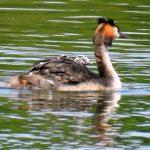 Group Trip to Sevenoaks KWT Reserve