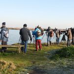 Group Visit to Cliffe Pools RSPB Reserve
