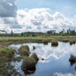 Thursley common trip report