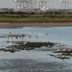 Group Trip to Cliffe Pools RSPB Reserve