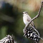 Dungeness reserve update - October 2019