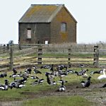 Elmley Trip 7th December