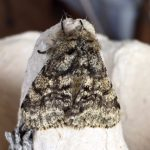 Moths - What's in a Name?