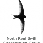Introducing the North Kent Swift Conservation Group