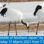Tickets available for March talk - 'Winter Wildlife in Northern Japan'