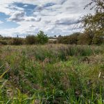 Swanscombe Marshes SSSI - your action requested