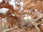 Small birds in Ashenbank Wood