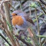 New Bird Hide - Millbrook Garden Centre