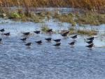 RSPB Rainham Marshes Trip Report - Sunday 25th November