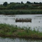 Trip Report-Saturday 4th September-Stodmarsh NNR