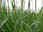 Rainham Marshes - revisited