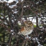 A Birding Year