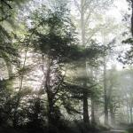 Dawn Chorus - Cobham Woods - 23rd May