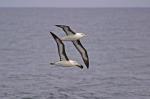 Christmas Stamps Save Albatross