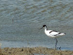 Minsmere 22nd May