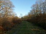 Bossenden Wood