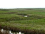 Elmley RSPB Reserve