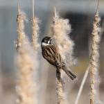 Rainham Marshes 26th Feb 2012